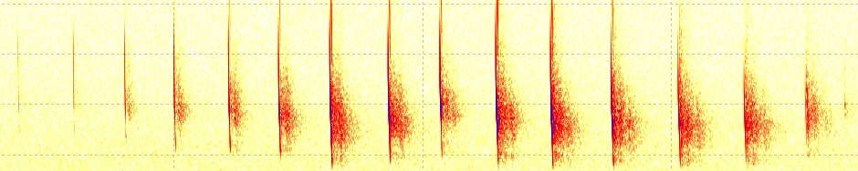 Swedish Bat Spectrograms